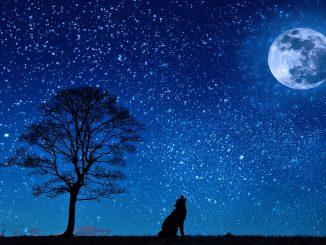 Nacht, Wolf, Mond