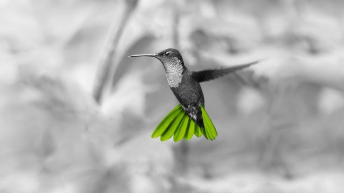 Across-Kolibri