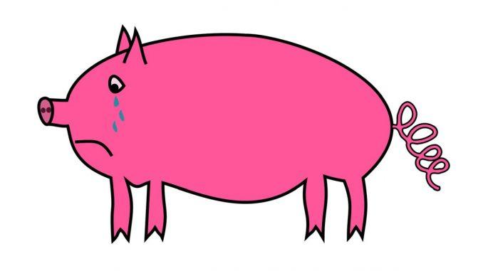 Schwein, weinend