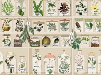 Indigene Sprachen und Heilpflanzen
